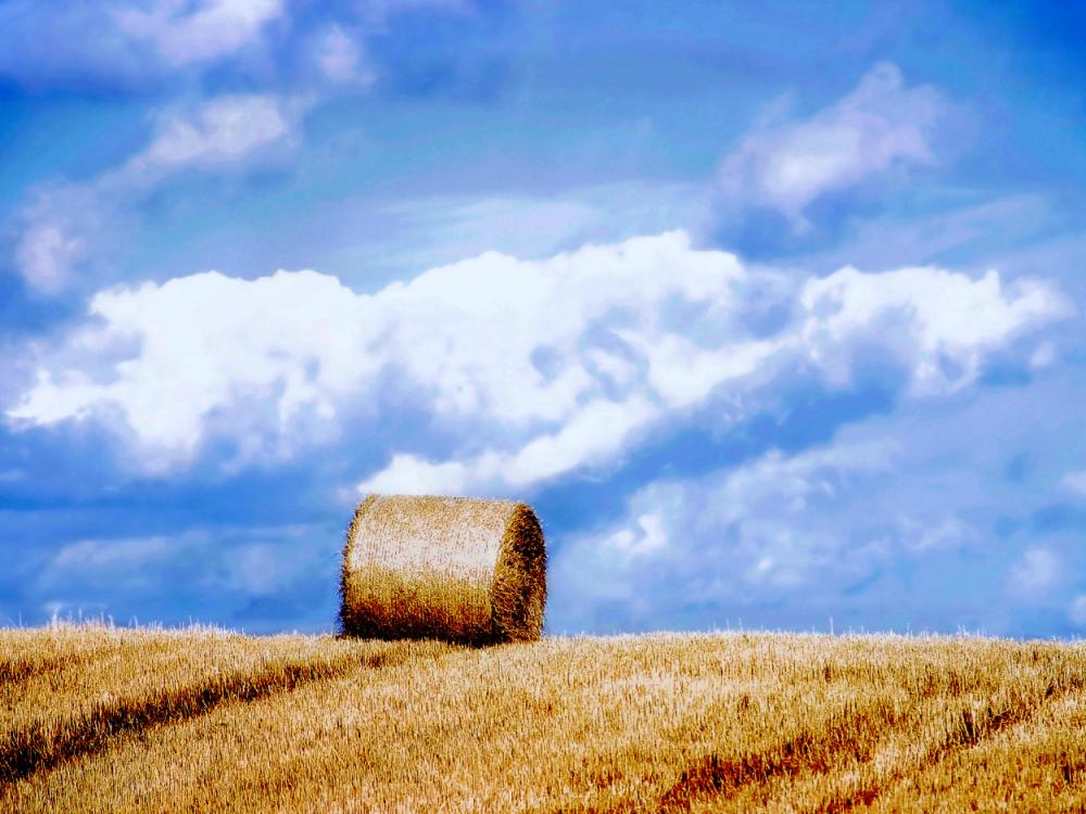 Con Il Decreto Legge Numero 4/2015 Il Governo Ha Approvato Le Nuove Regole  Riguardanti Lu0027IMU Sui Terreni Agricoli. I Contribuenti, Che Non Rientrano  Nei ...